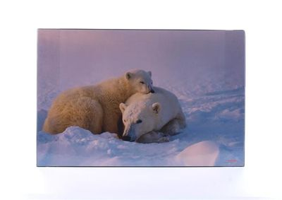 "Podložka na stôl, 580x380 mm, LS ""Ľadové medvede"""